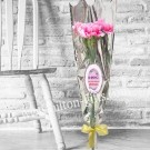 Carnation ( 5 pcs)