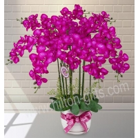 Artificial Phalaenopsis Arrangement