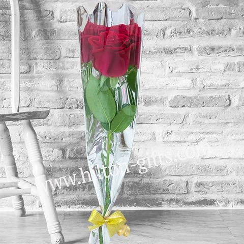 Red Roses (5 pcs)