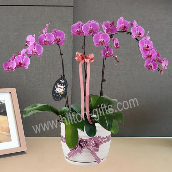 Purple Phalaenopsis Table Garden