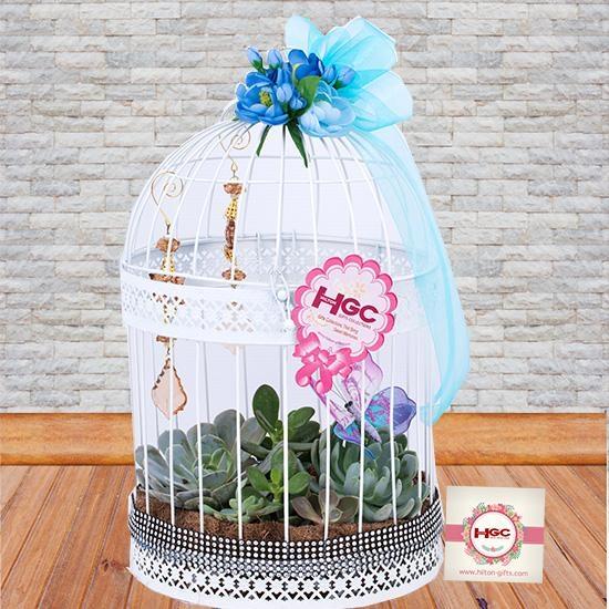 Echeveria Cage